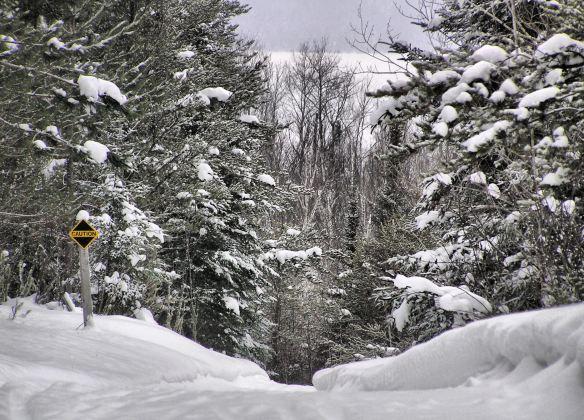 Ridge Run trail, overlooking Flour Lake. Photo by Karen Reynolds.