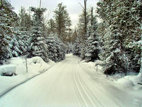 1.27.2015 ski trail