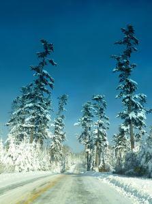 12.18.2015 the pines snow