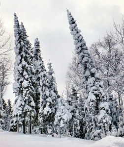 best frosted trees