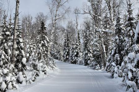 Summer Home Road ski trail